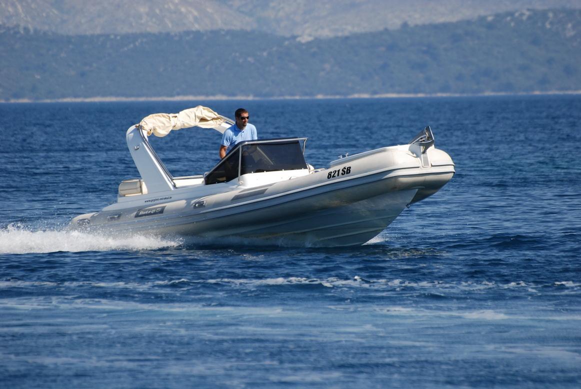 SHARK-03